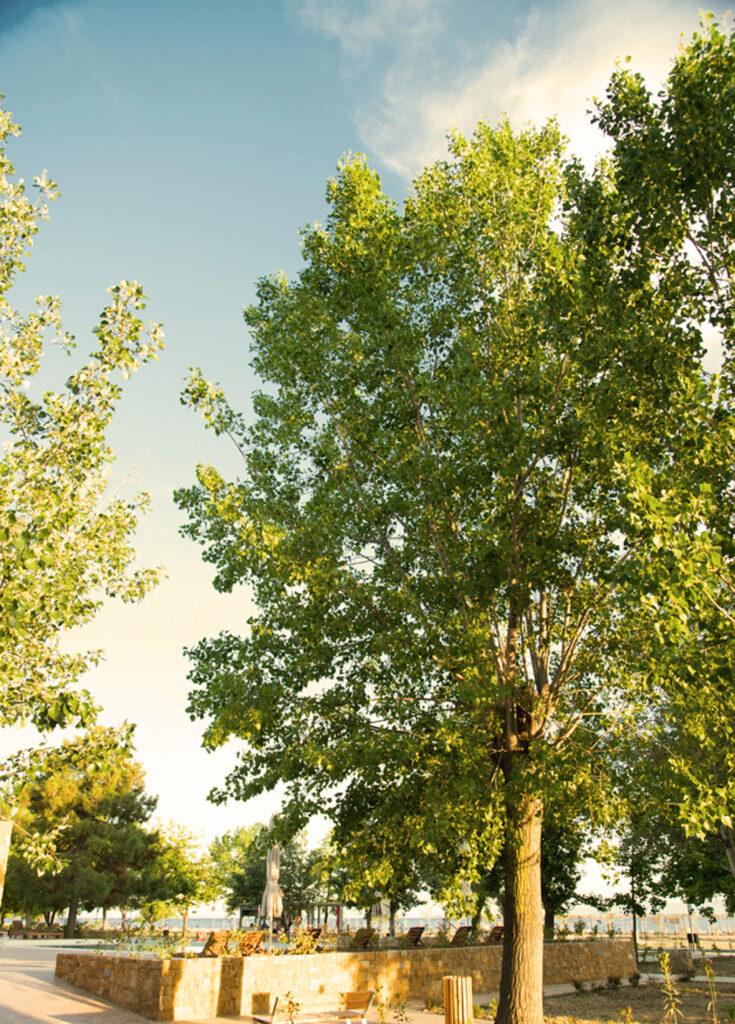δέντρα στο καμπινγκ